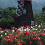 현재 서울대공원 테마가든내 장미원 모습